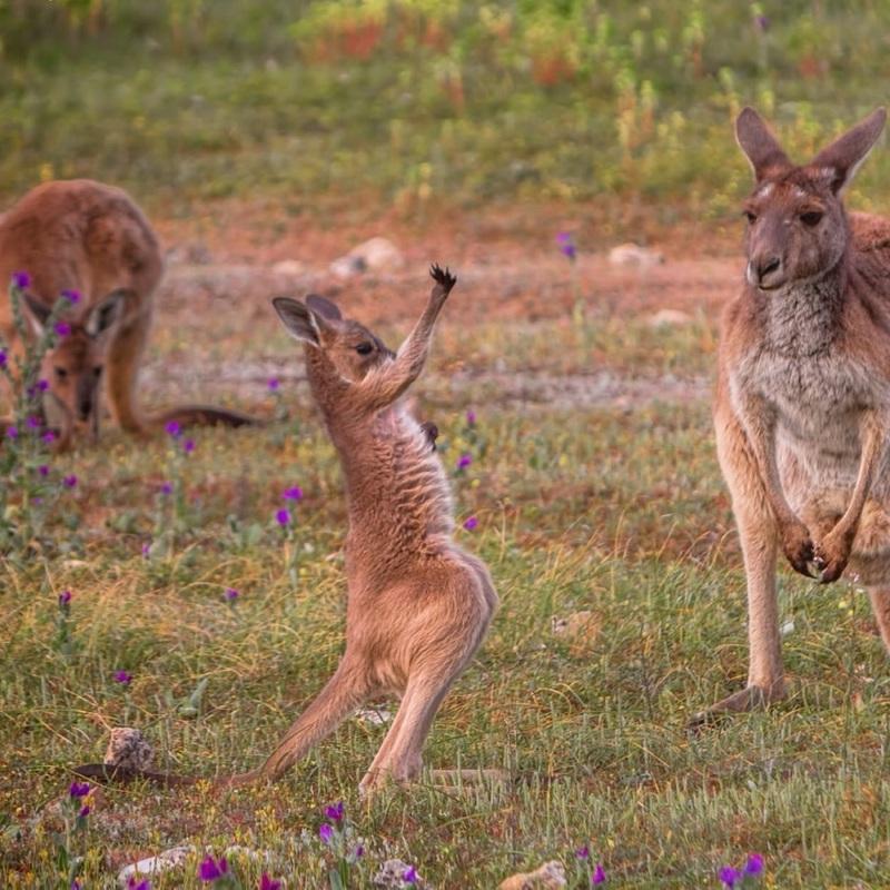Down Under naar Australië, bucketlist, sparen