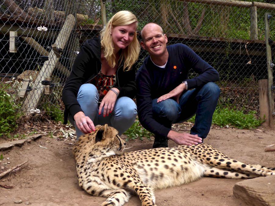 Cheetah aaien