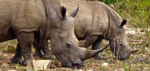 Reisfilm Zuid-Afrika, Lesotho en Swaziland